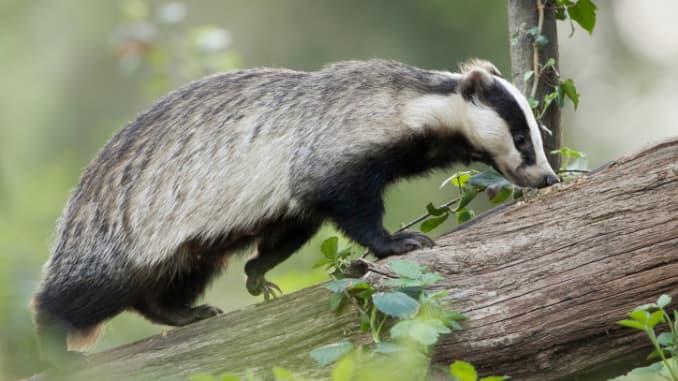 Government shutdown? Honey badger market doesn't care
