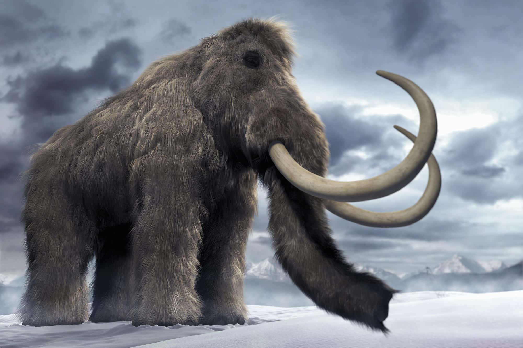 A digitally-generated image of a woolly mammoth.