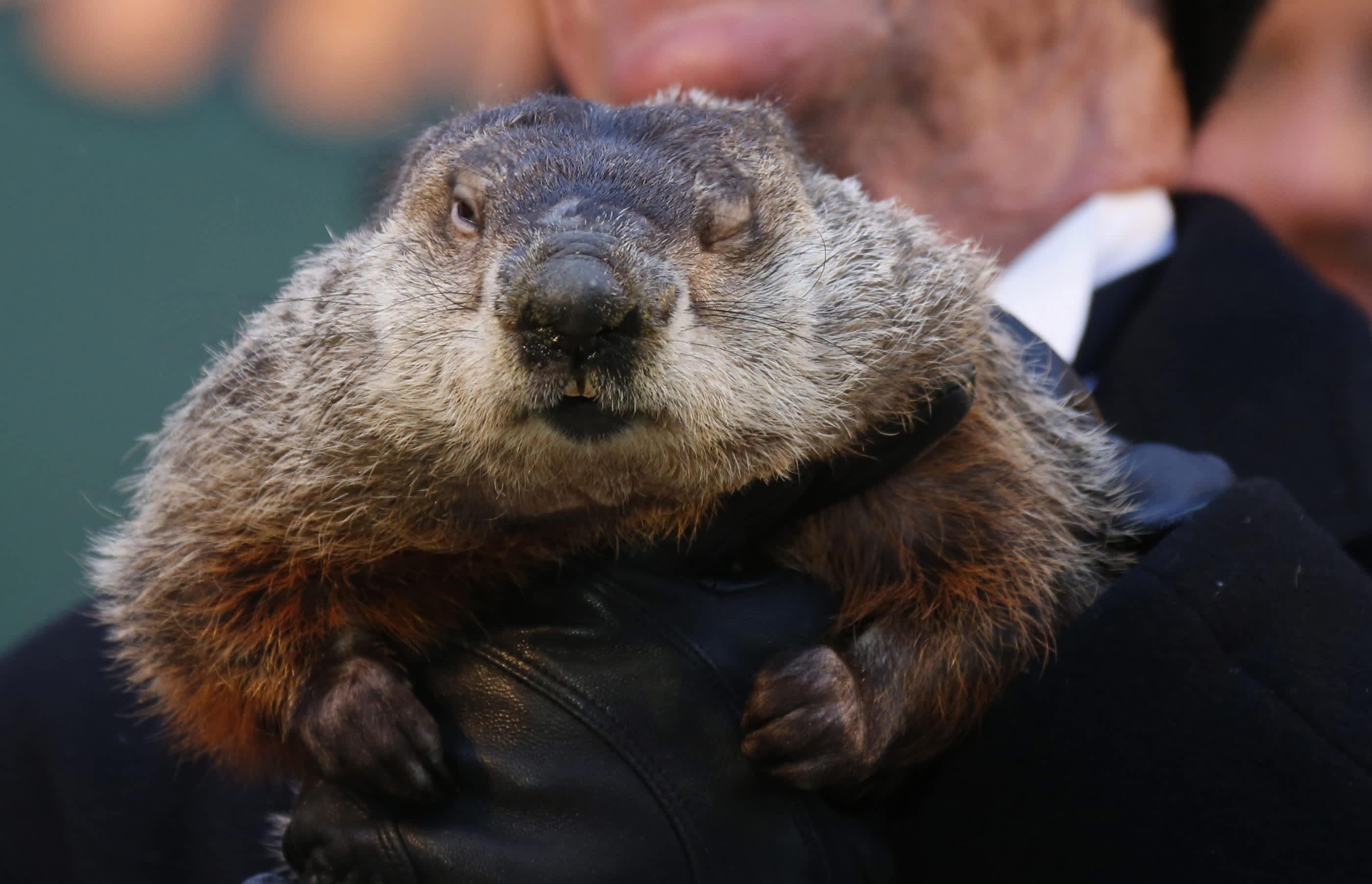 Puxatony phil groundhog day