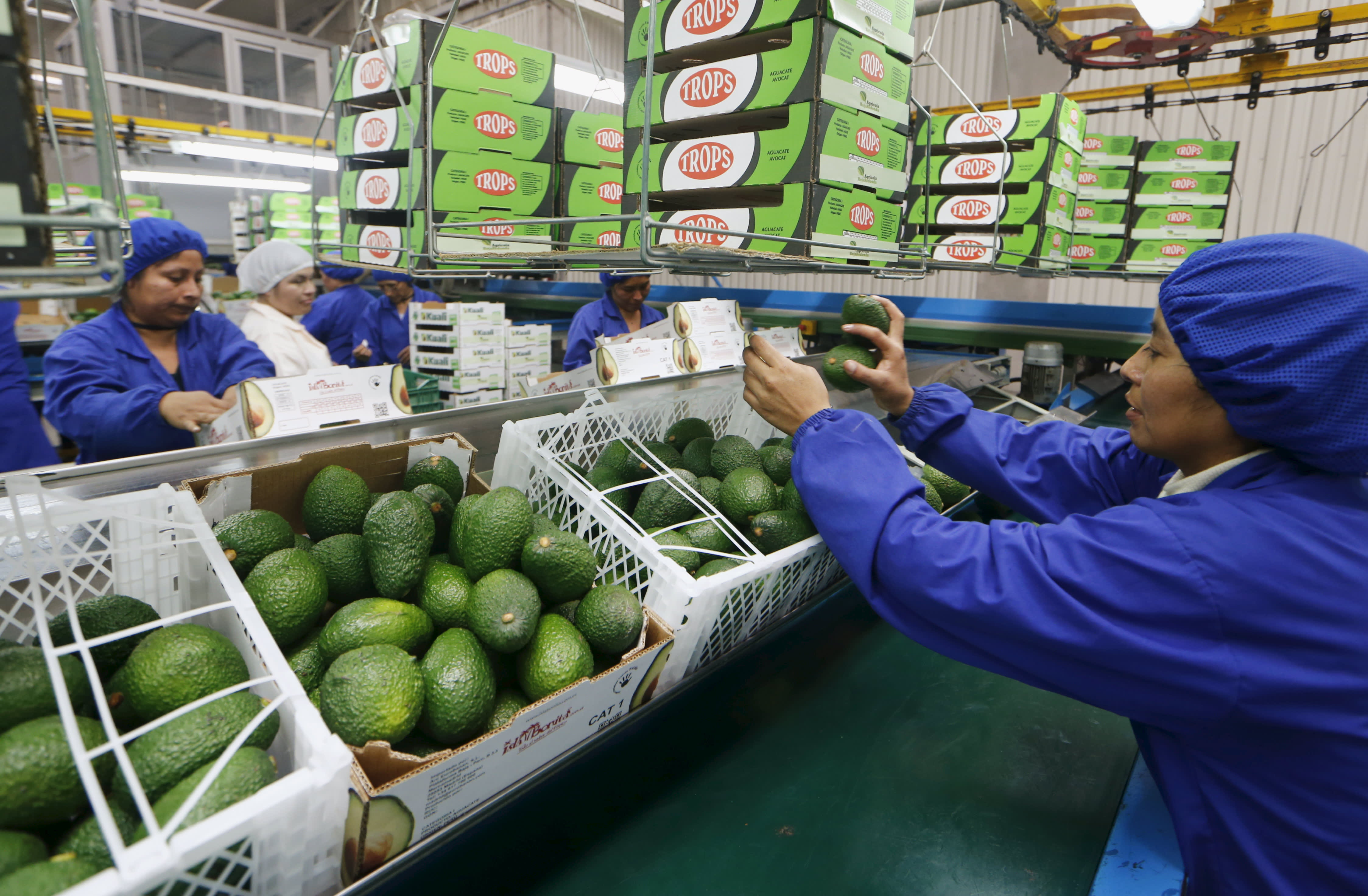 Avocado prices starting to come down as more supplies arrive