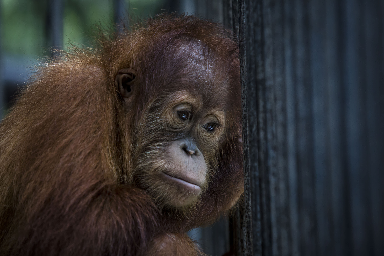 Wildlife habitat destruction will cause more pandemics