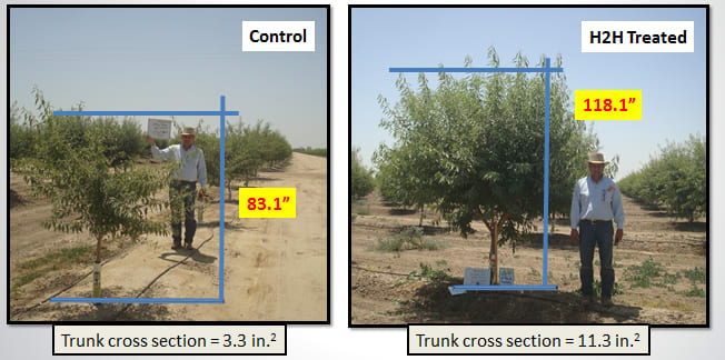 HANDOUT Almond Tree comparison KDC Ag