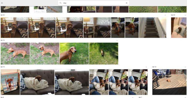 CNBC Tech: Google Photos dog