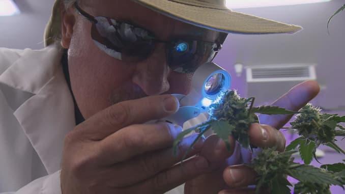 Five hot new careers created by marijuana legalization