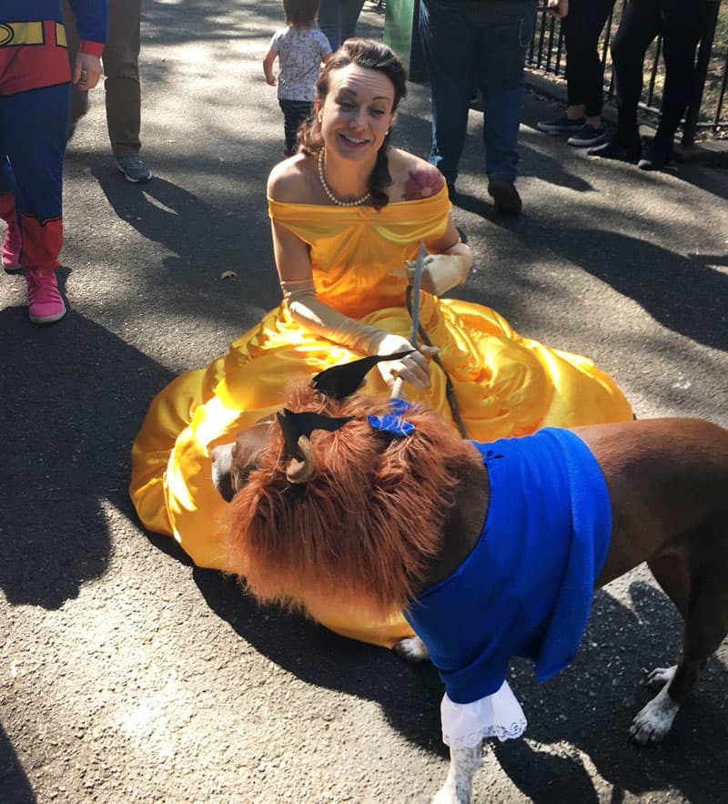CNBC: Dog in Beauty and the Beast costume