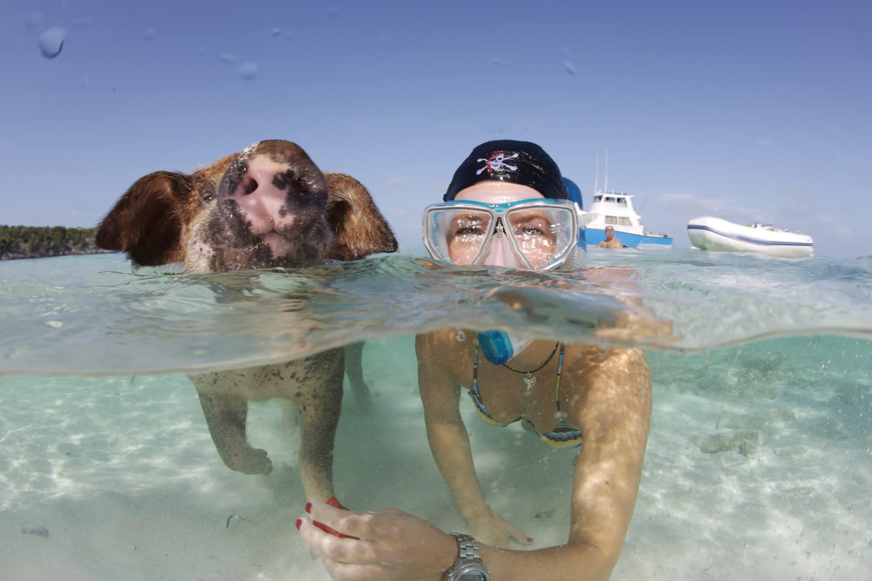 Смешные картинки туристов на море