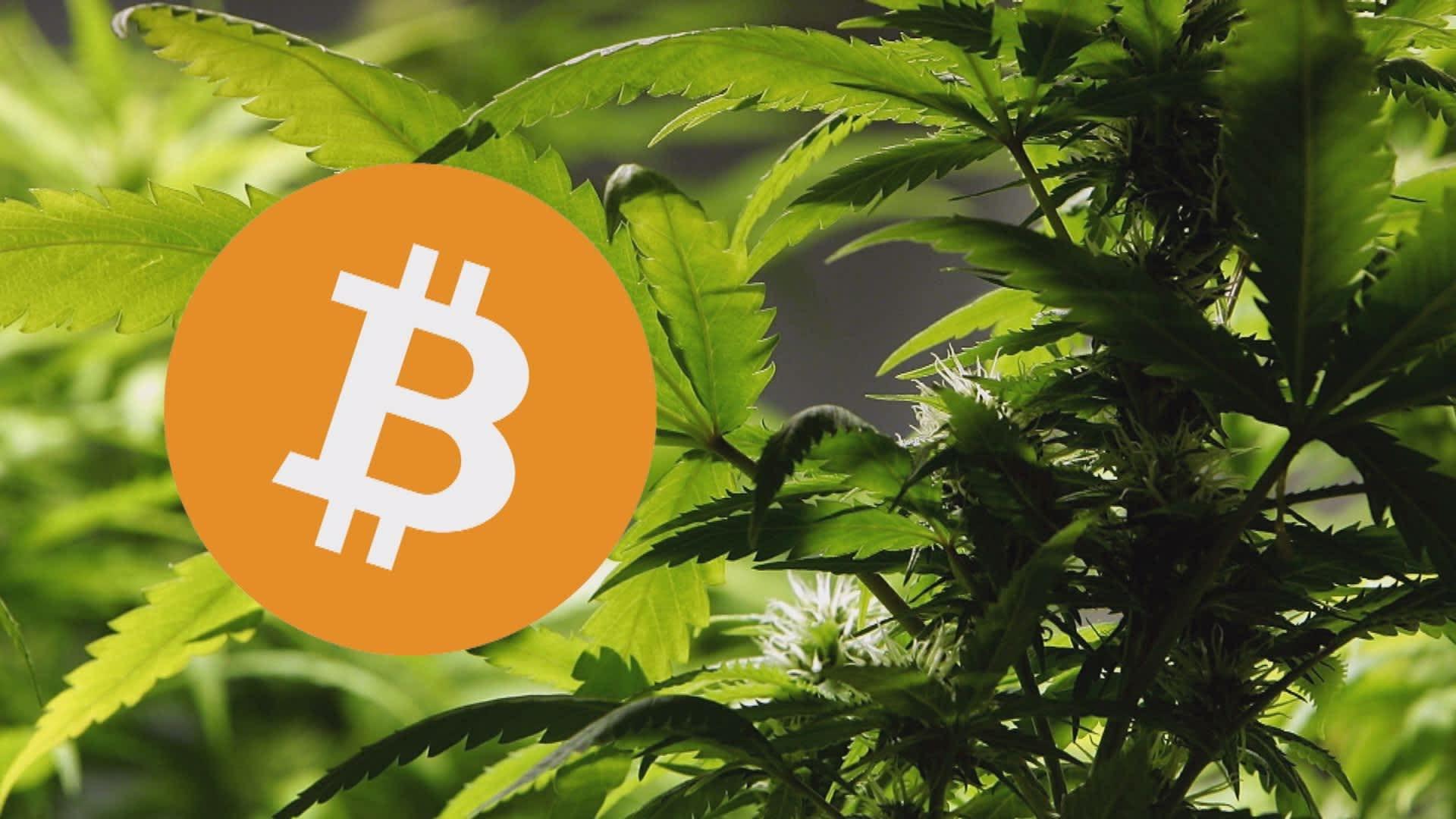 Купить марихуану за биткоин где растет конопля по иркутской области