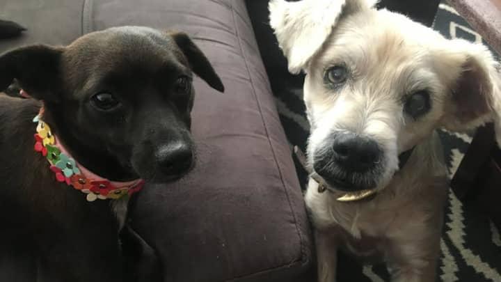 ventura99: Buffalo Craigslist Dogs For Sale