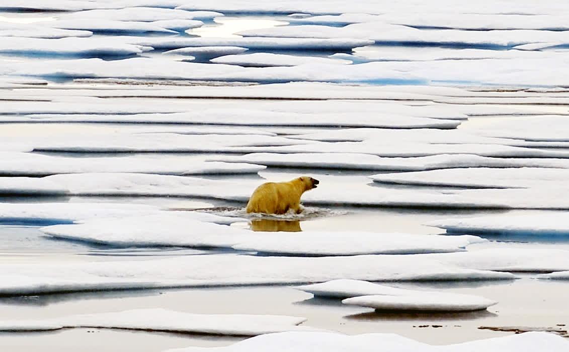 "Photo taken from China's icebreaker ""Xue Long"" shows a polar bear on floe ice in the Chukchi Sea."