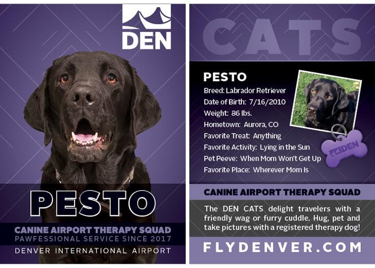 Denver Therapy dogs Pesto baseball card
