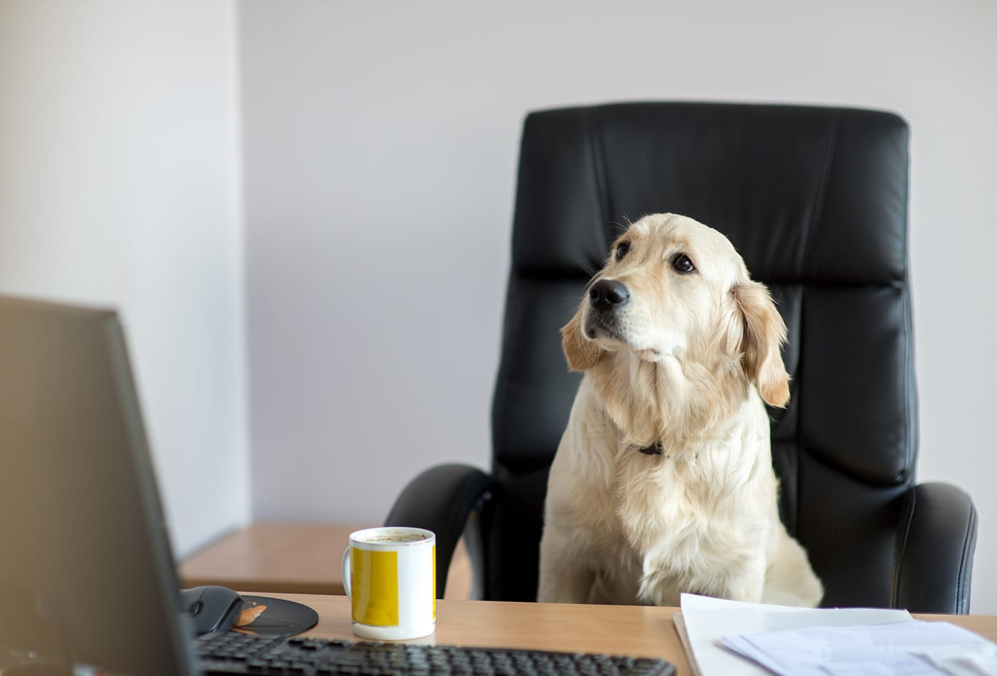 There are 6,000 dogs 'working' at Amazon and they get access to these cool perks