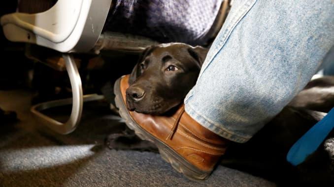 Delta updates comfort-animal policy to one per passenger no
