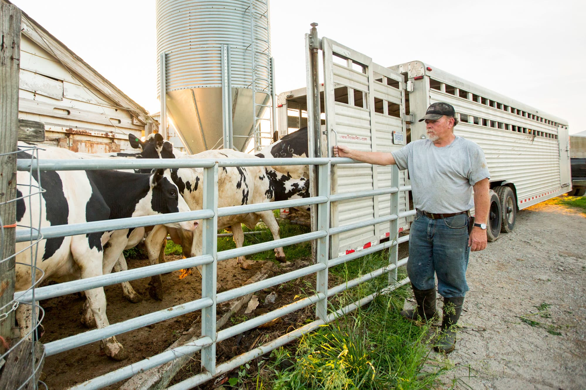 Dairy farmers are struggling as they are squeezed out of a