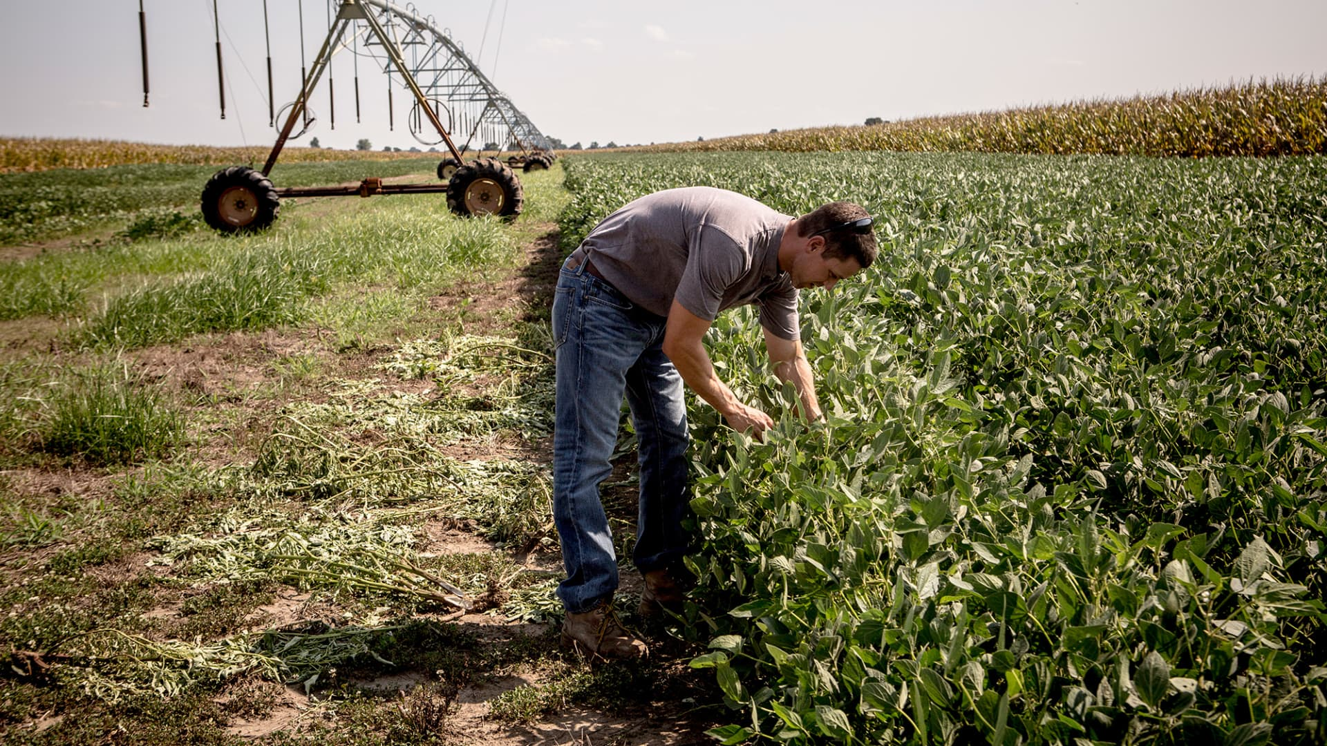 A soybean farmer in Mississippi County, Arkansas.