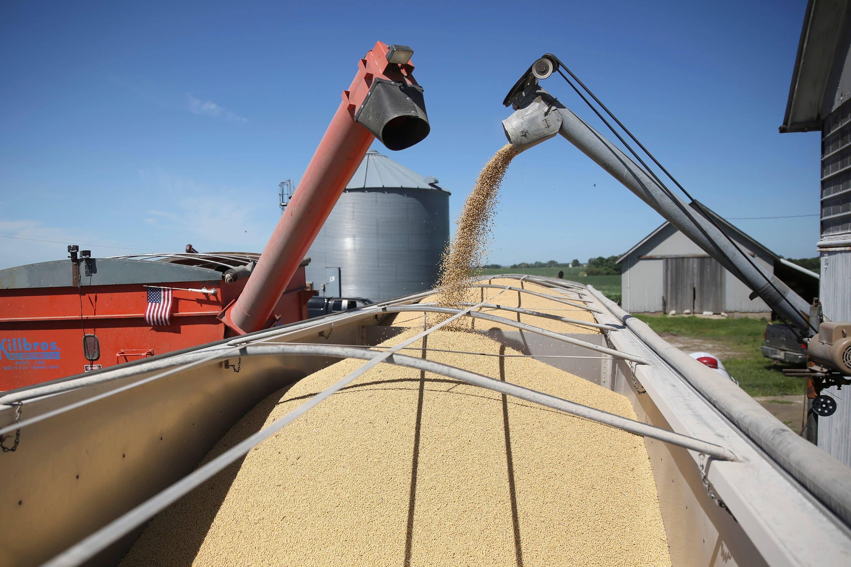 Farmers optimistic about 2019 despite predictions of more