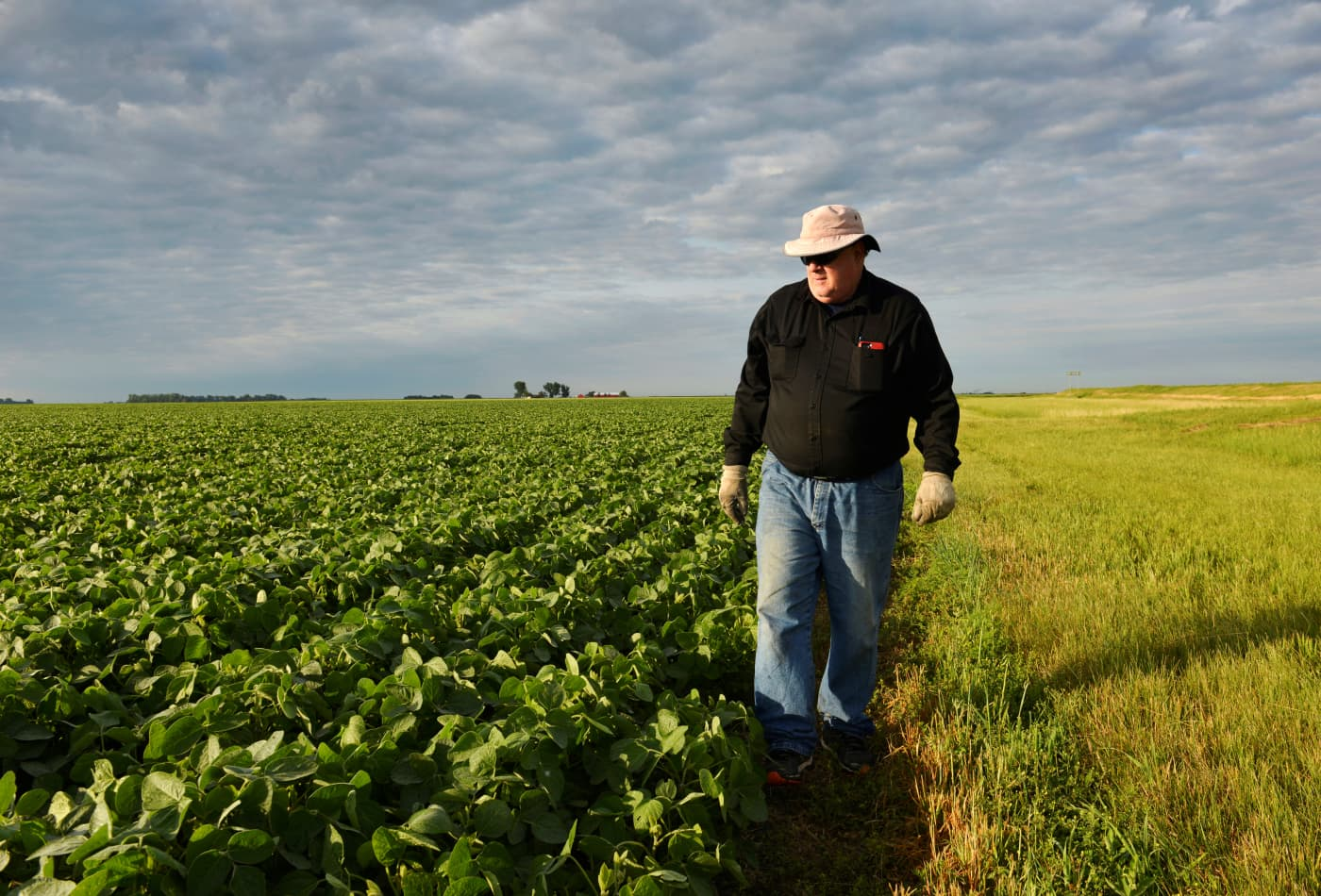 'Trump is ruining our markets': Struggling farmers are losing a huge customer to the trade war — China