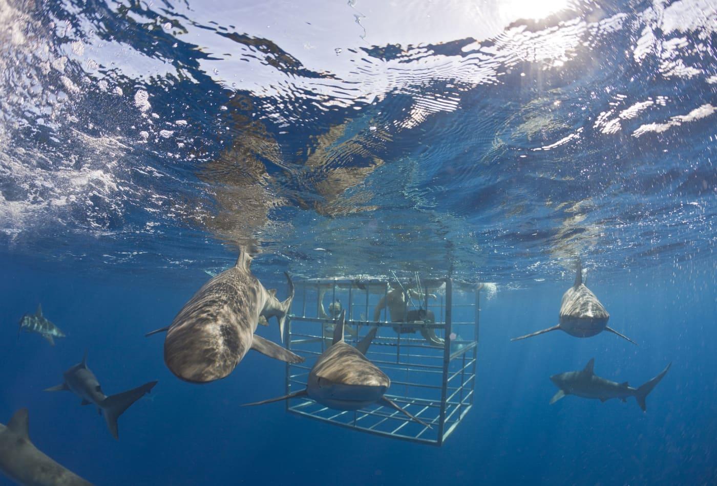 Where 'Shark Tank' stars Mark Cuban, Kevin O'Leary went for