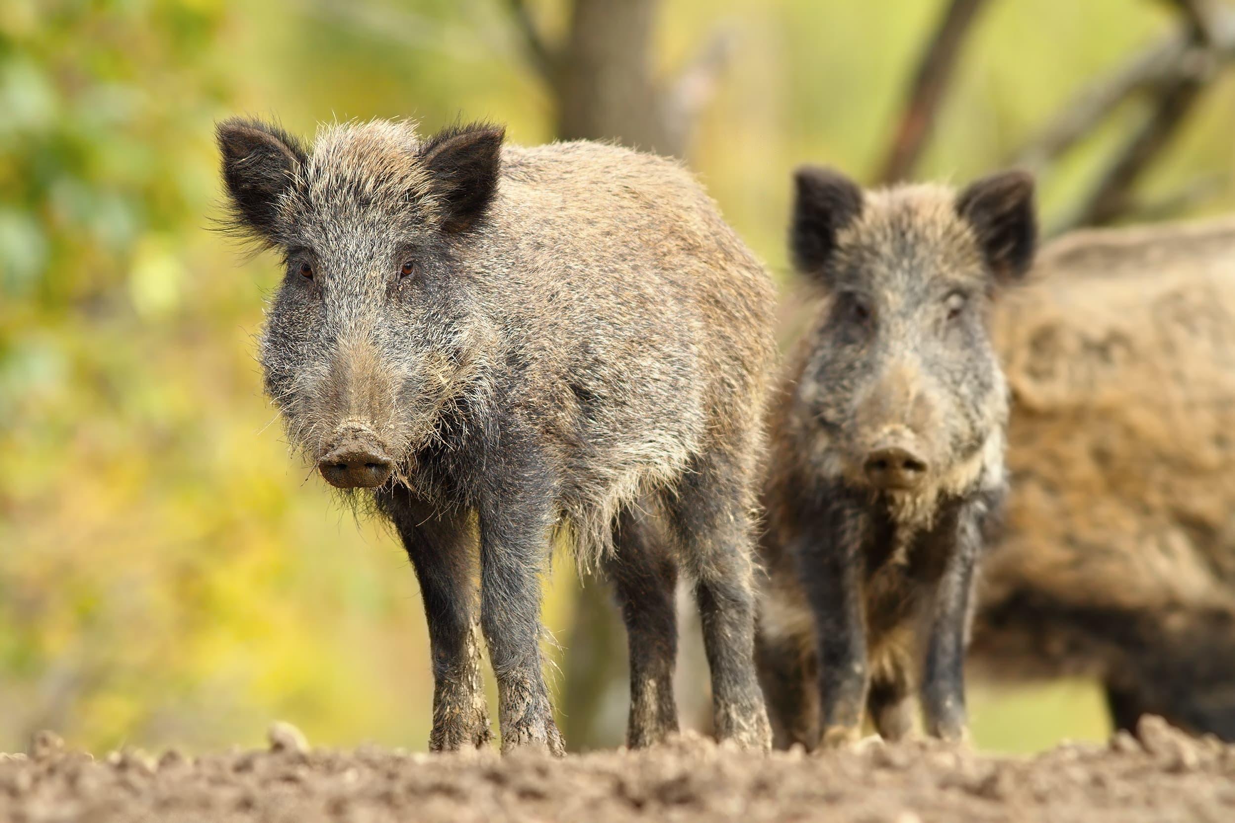 Mark Zuckerberg wears full camo to hunt wild boar on Hawaii
