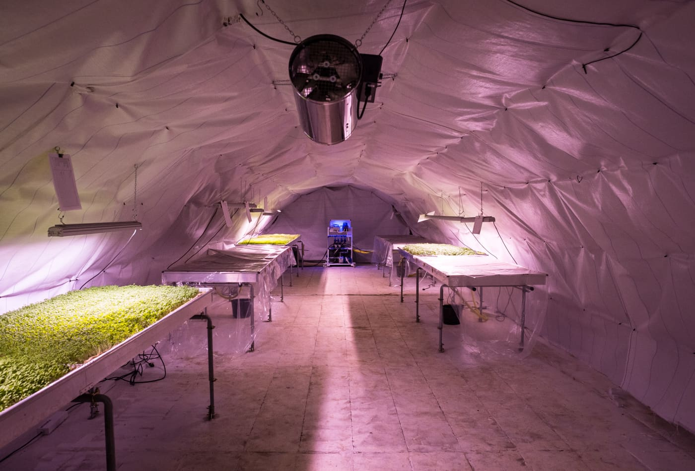In London, there's an underground farm growing salad without soil