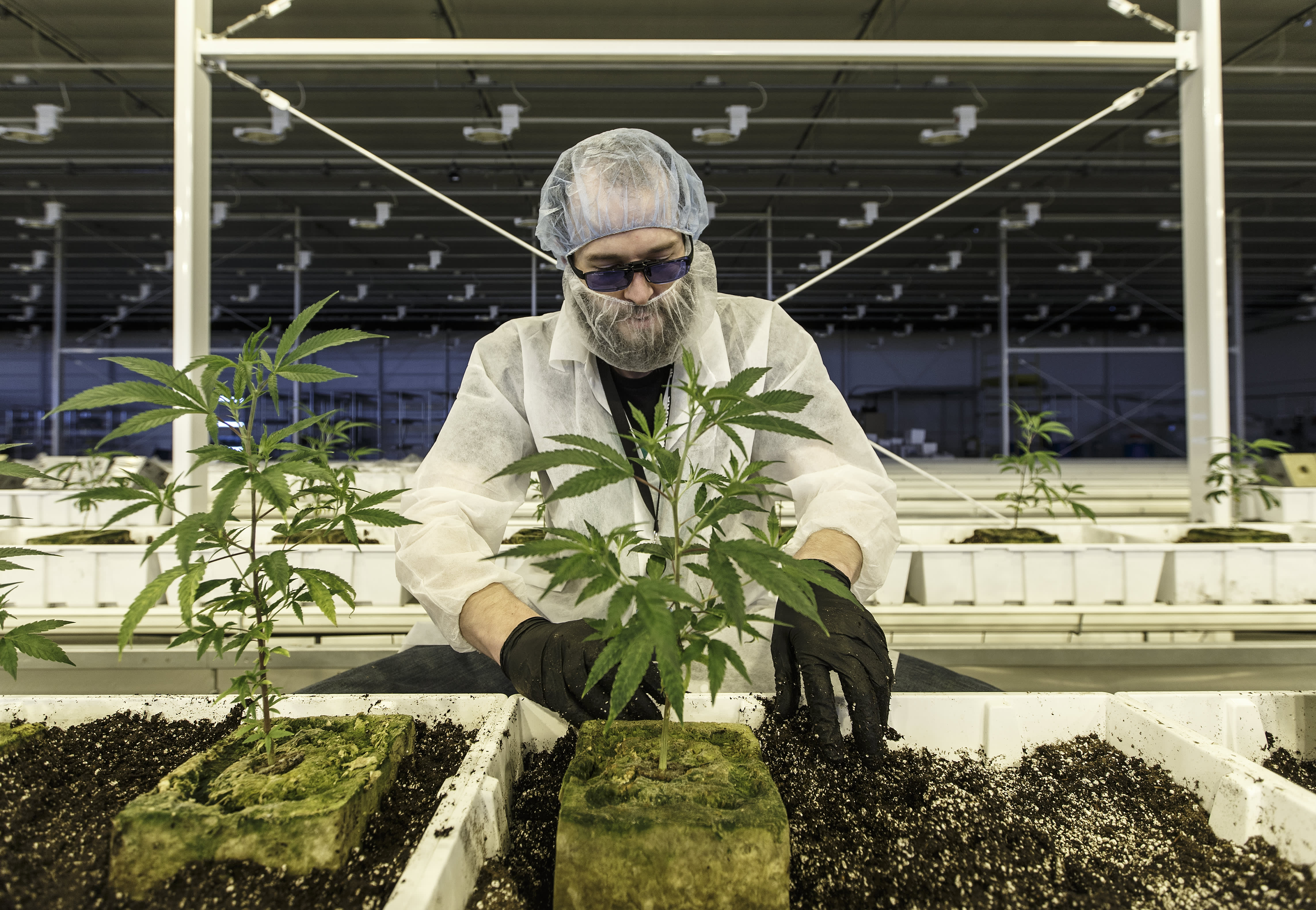 A US-based cannabis company could be active in as little as 6 months, says pot investor thumbnail