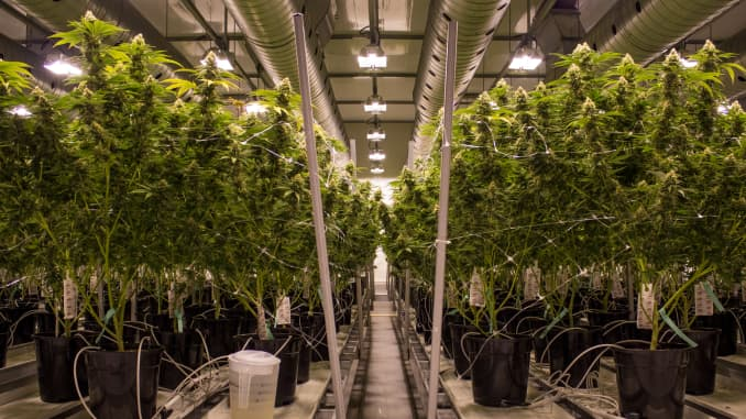 Canada's Canopy Growth shares jump on deal to develop hemp