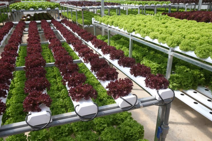 GP: organic hydroponic farm