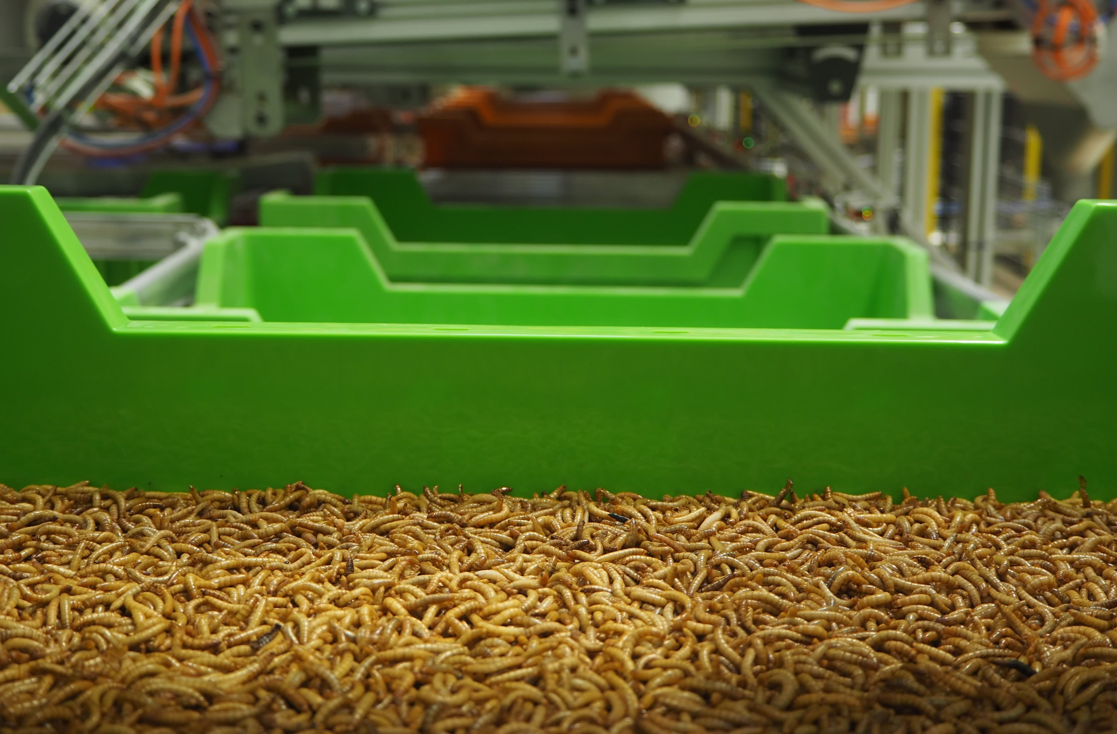 French firm that uses automation to build world's biggest insect farm