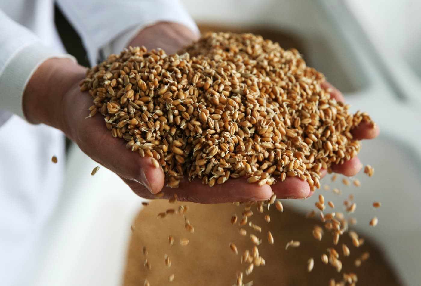 Whole grains can reduce risk of liver cancer by nearly 40 percent, study finds