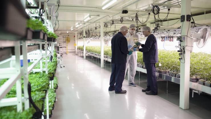 GP: Growers meeting, inspecting cannabis seedlings in incubation
