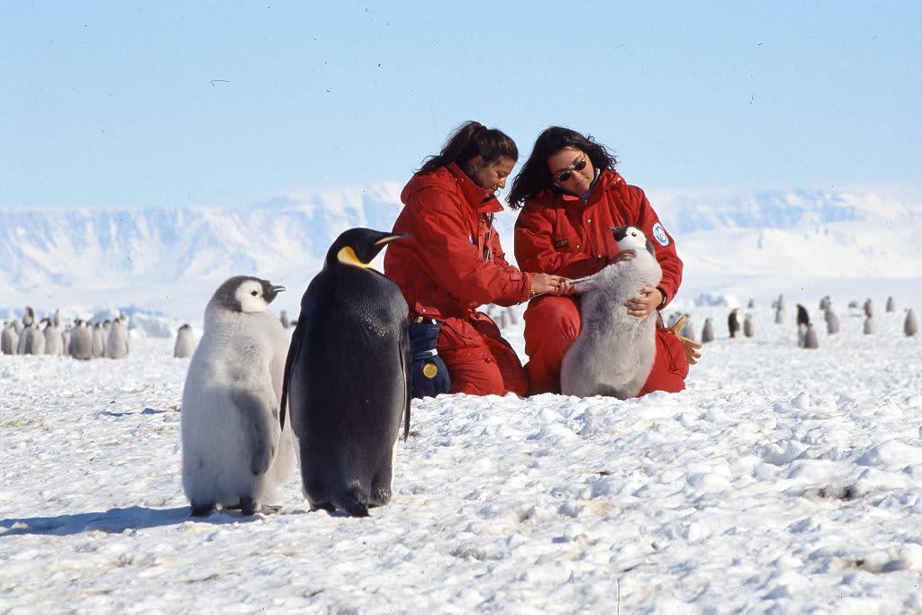 GP: Wildlife biologists