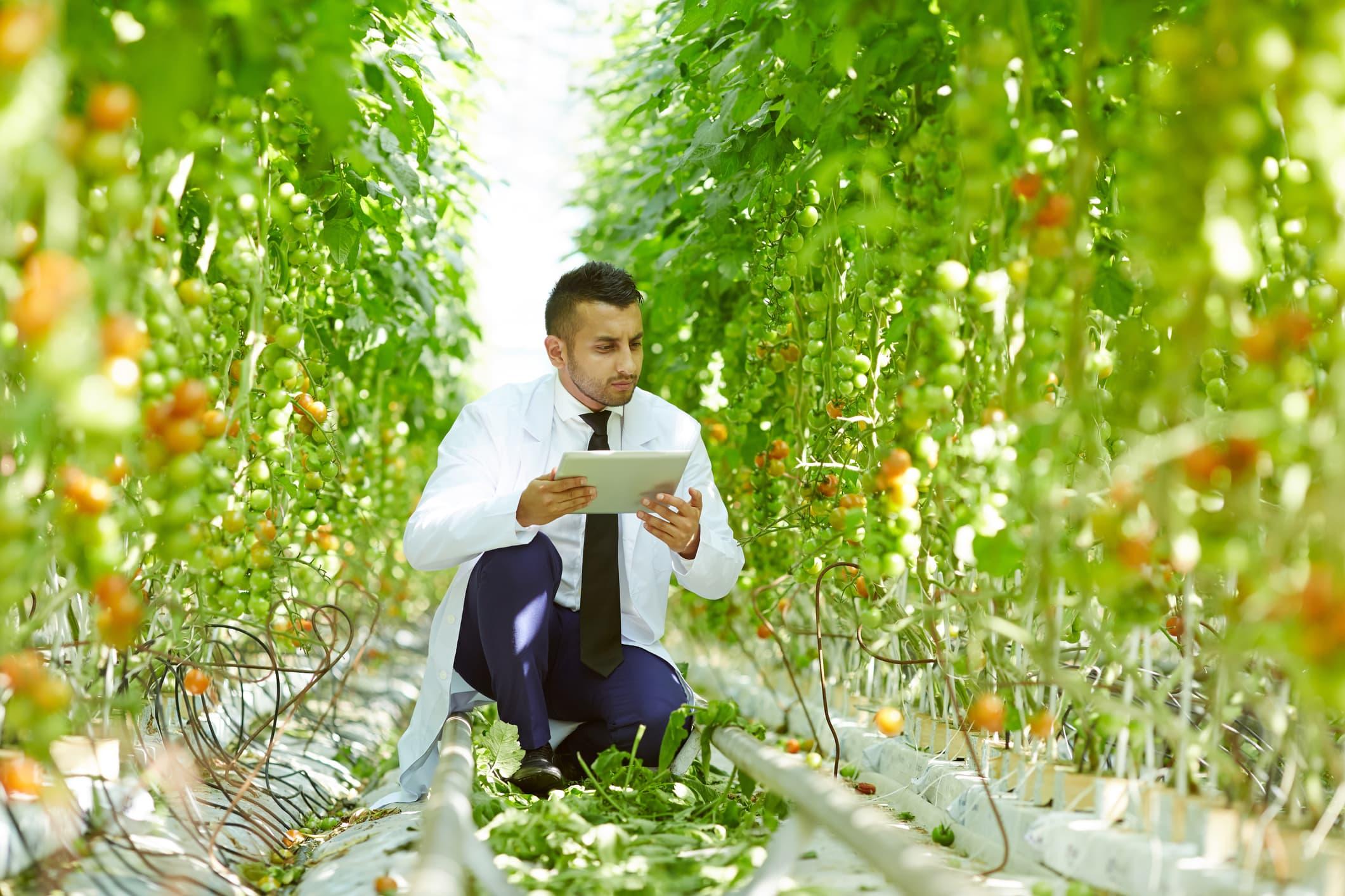 GP: Food Scientist