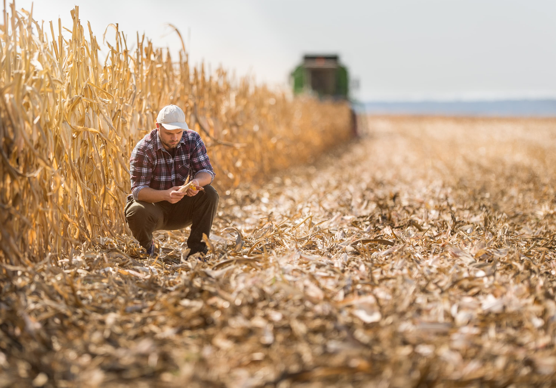 GP: Young farmer in corn fields