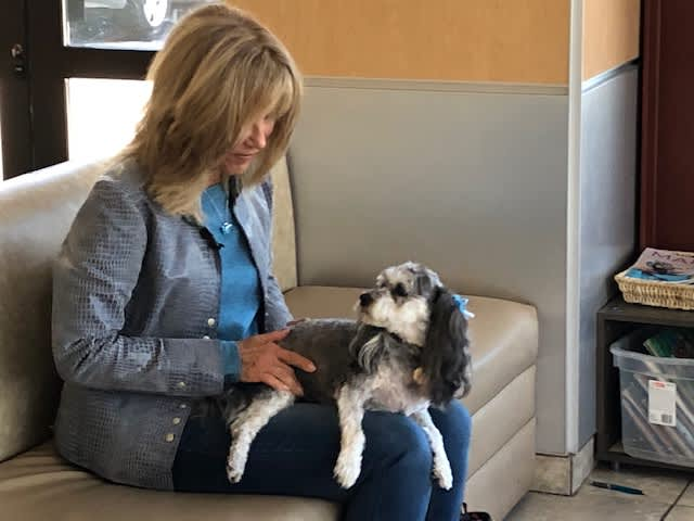 One Health uses precision medicine to treat dogs with cancer