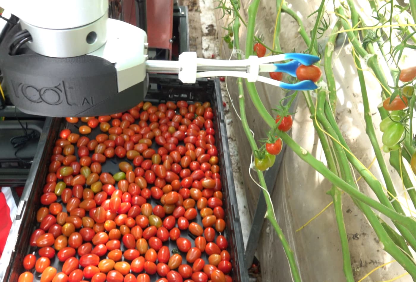 This robot can pick tomatoes without bruising them and detect ripeness better than humans