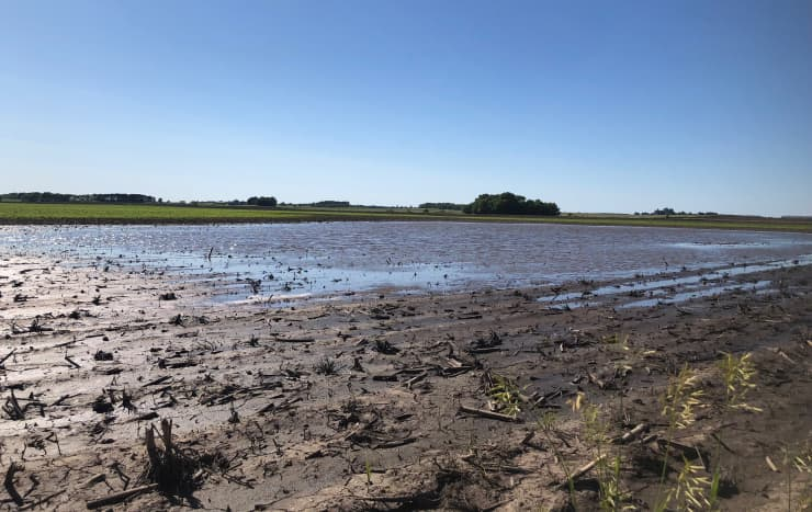 Illinois Field Floods Farmers 190616 EC