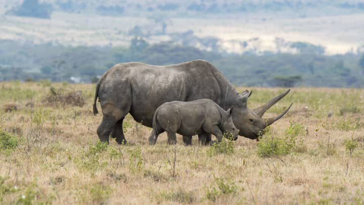 New 'rhino bonds' to allow investors to help with wildlife conservation
