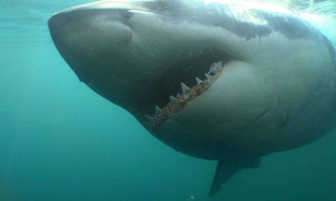 Cape Cod's looking into technology to stop the shark attacks, but some officials say that could backfire
