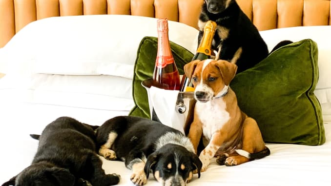 Where to stay and play with your pup on National Dog Day