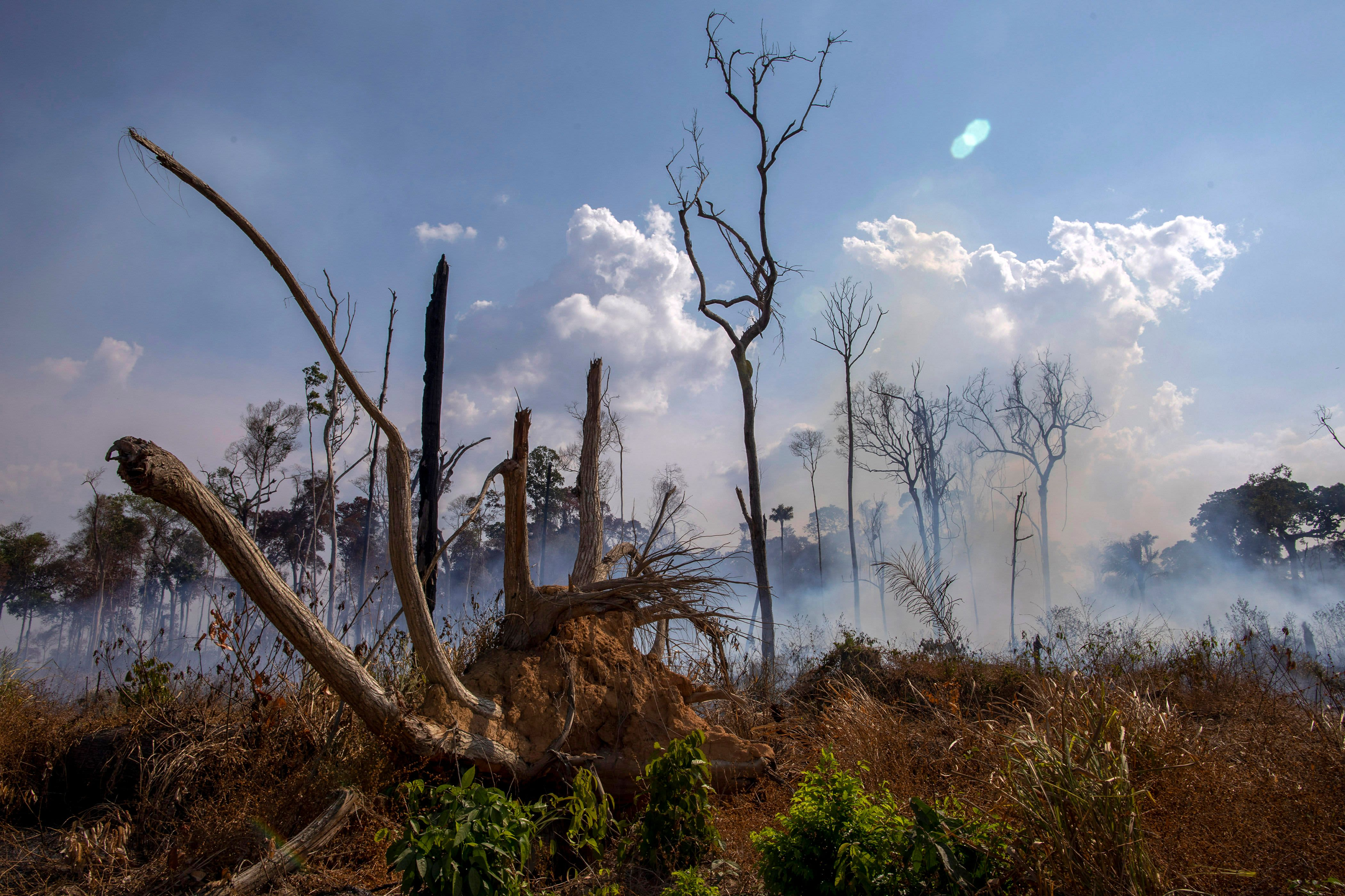 The Amazon rainforest is still on fire—here's how you can help