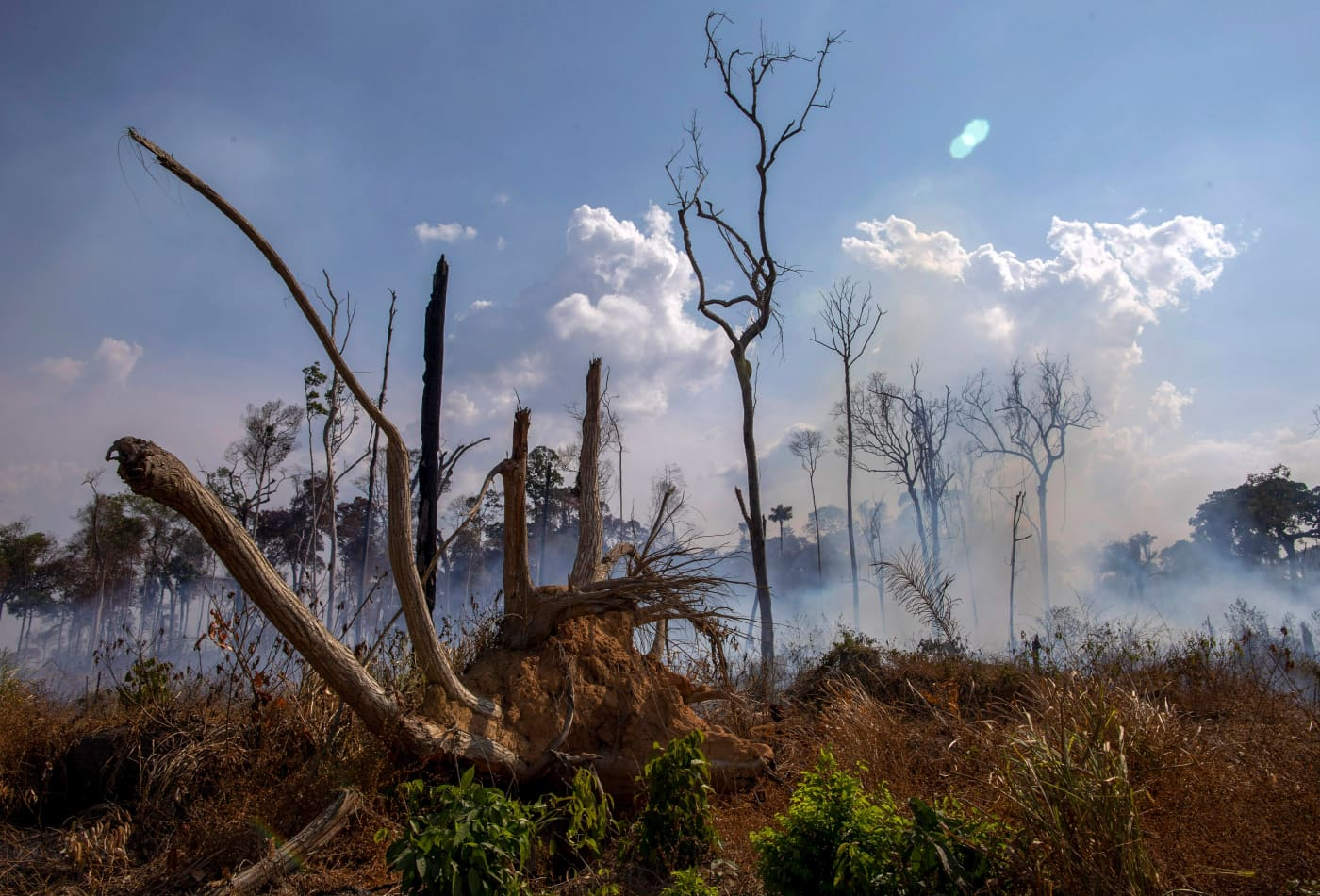 The Amazon Rainforest Is Still On Fire Here S How You Can Help