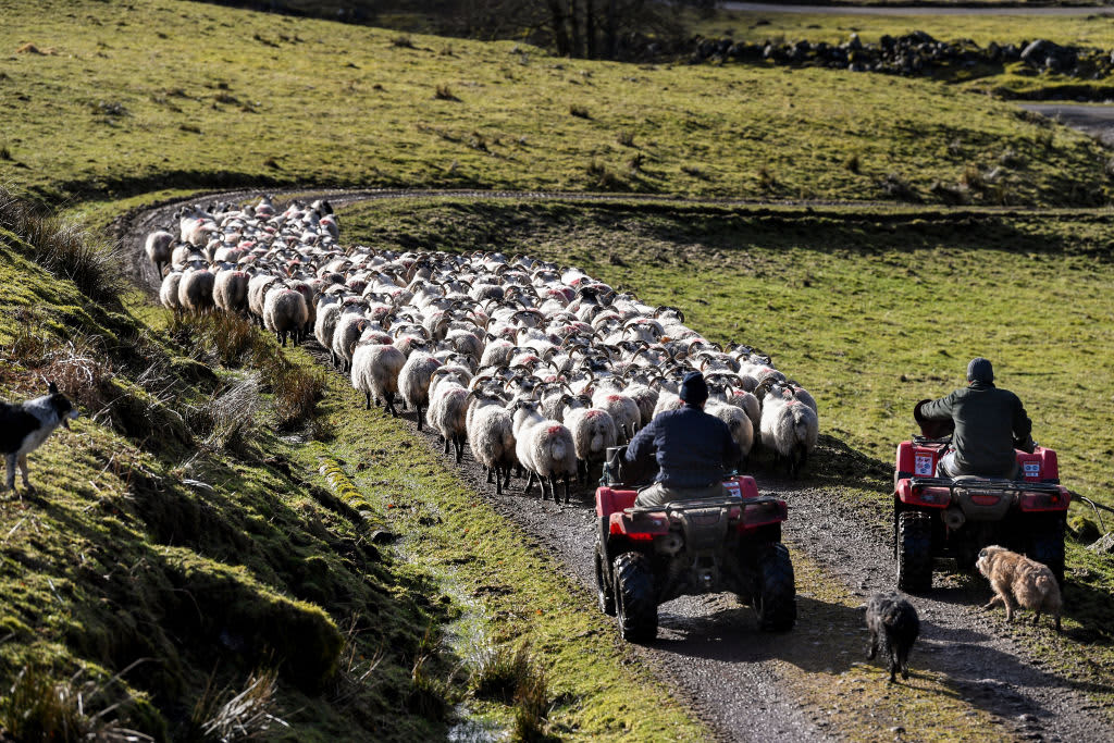 UK farmers call for import tariffs on agricultural products in no-deal Brexit