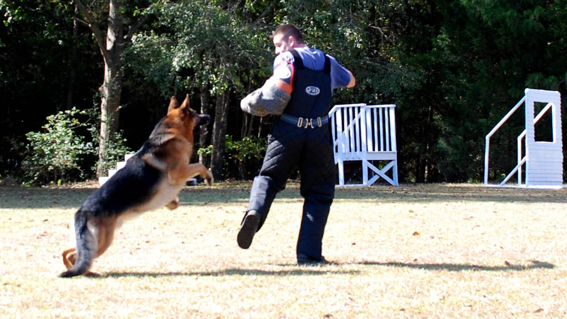 A trainer being chased during an exercise with a Harrsion K-9 protection dog.