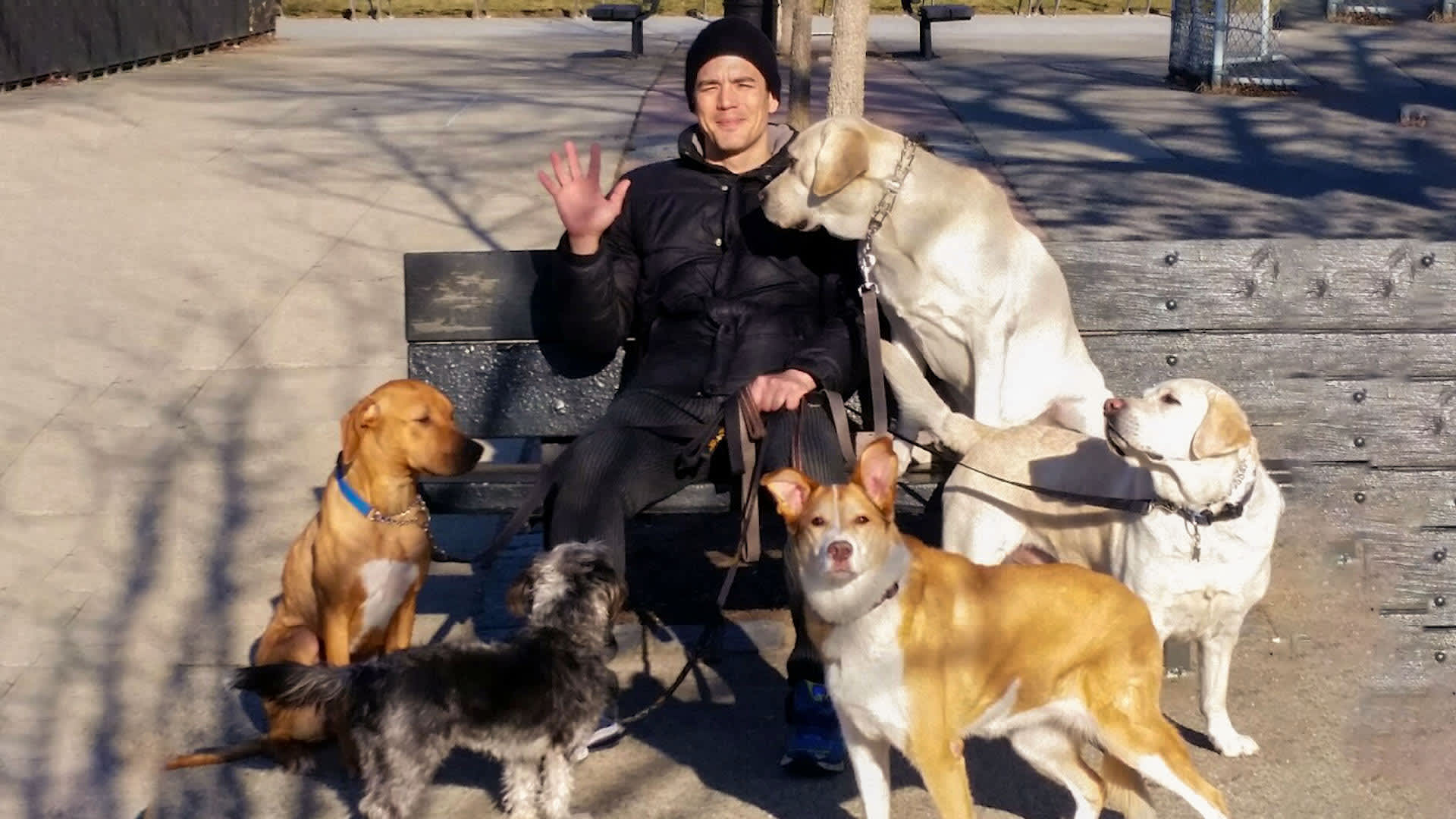 This guy makes six figures a year with his dog walking business