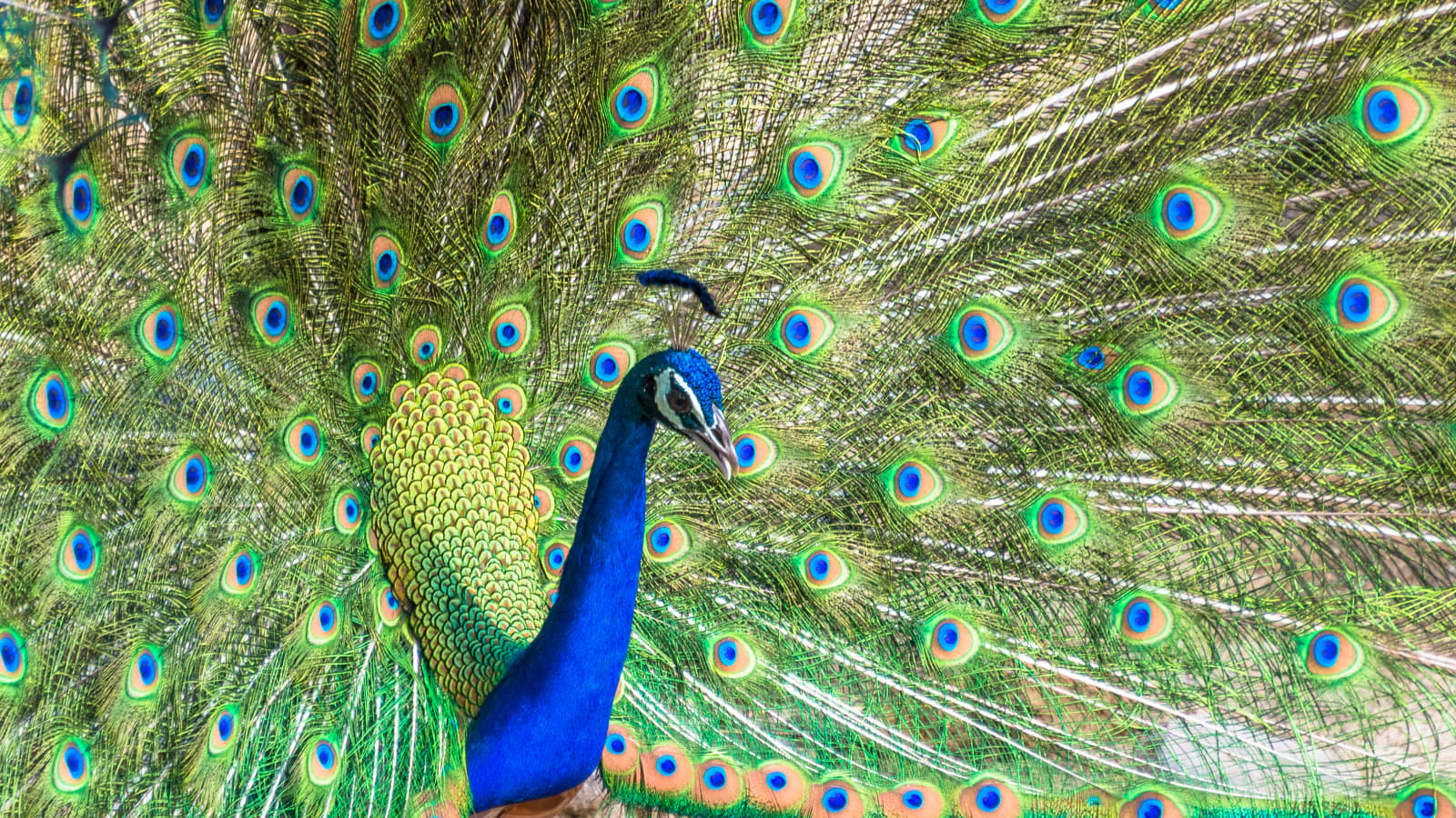 NBCUniversal Peacock unveiling: What to expect