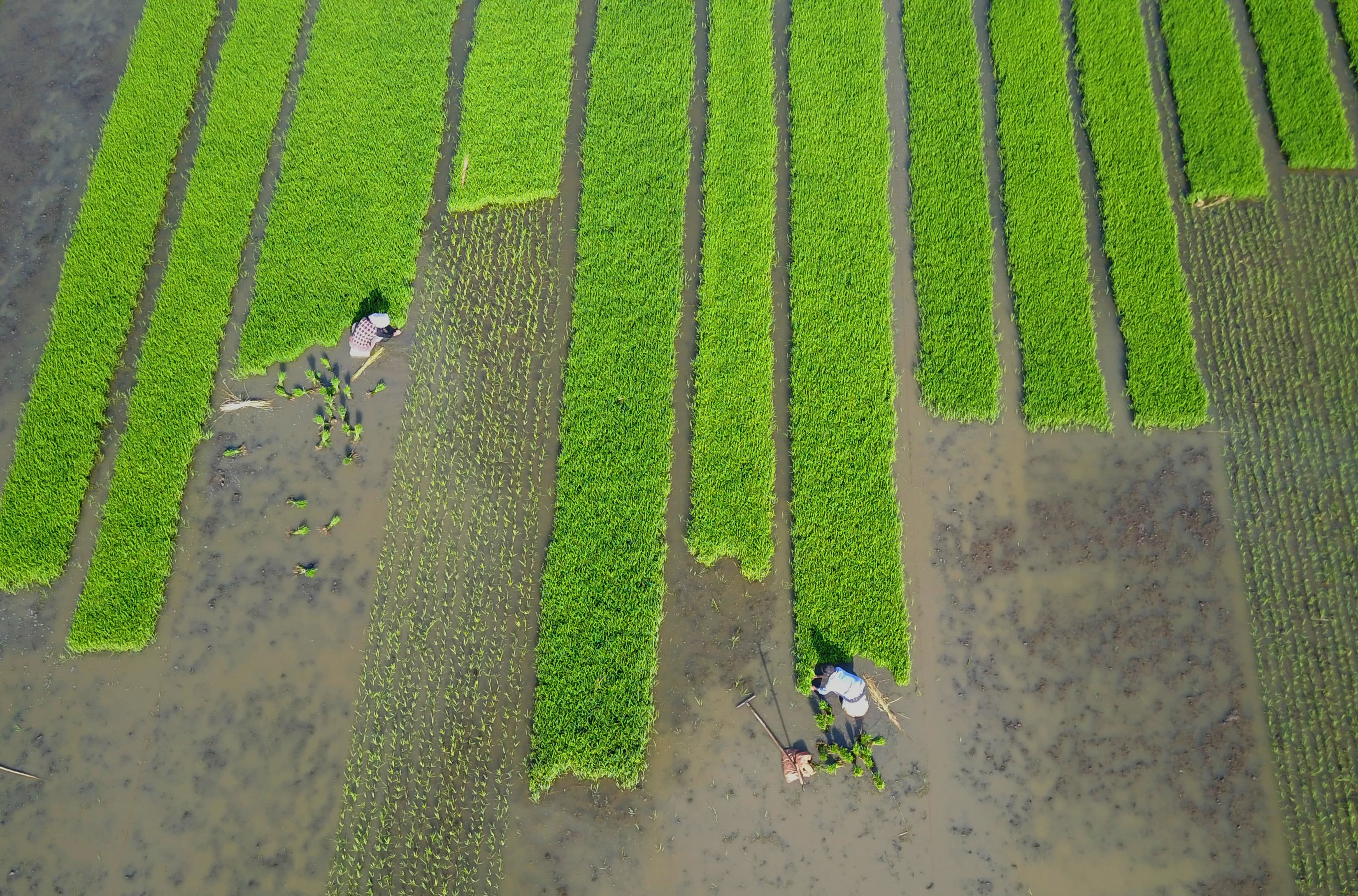 Asia is facing a food crisis and needs another $800 billion in the next 10 years to solve it