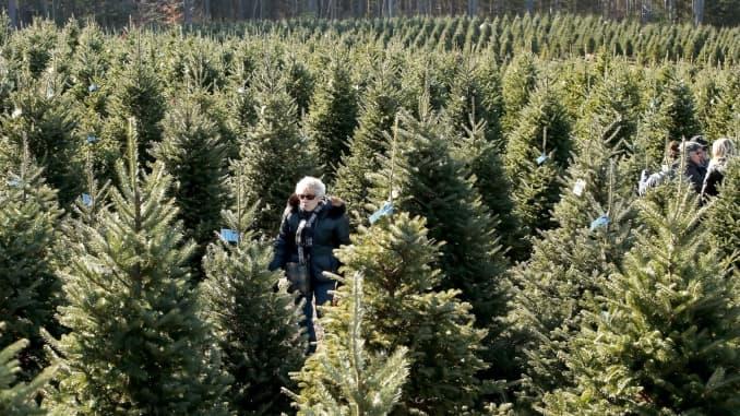 GP: Christmas Tree farm 171124