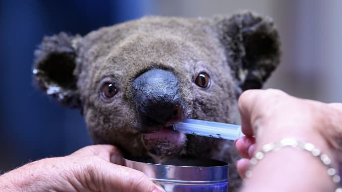 GP: Australia Wildfires: AUSTRALIA-KOALA-ANIMAL-FIRE