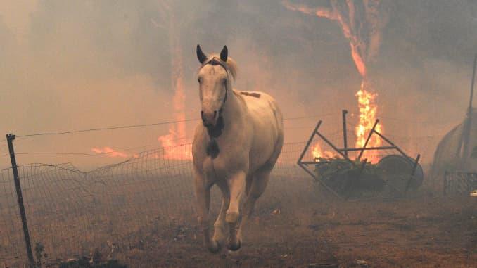GP: animales Australia Wildfires en riesgo AUSTRALIA-Tiempo-INCENDIOS