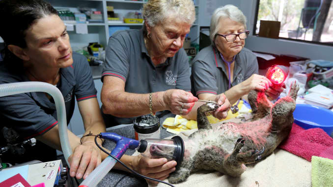 GP: Incendios forestales en Australia: el Hospital Koala trabaja para salvar animales heridos después de incendios forestales en el este de Australia