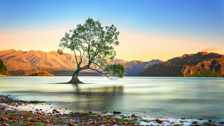 GP: Wanaka tree 200130